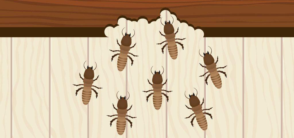 32-termitas-hogar